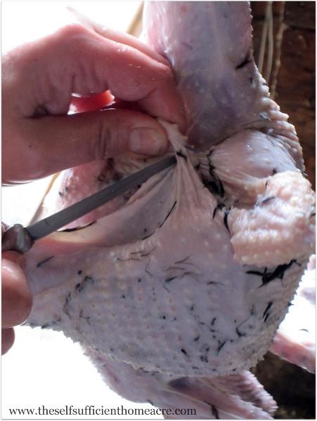 Chicken Butcher 6